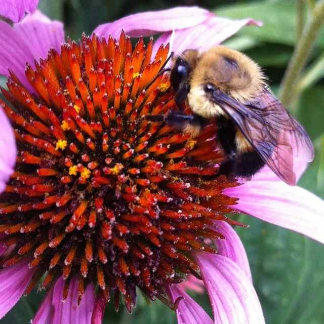http://zhurnaly.com/images/Bee_flower_1.jpg