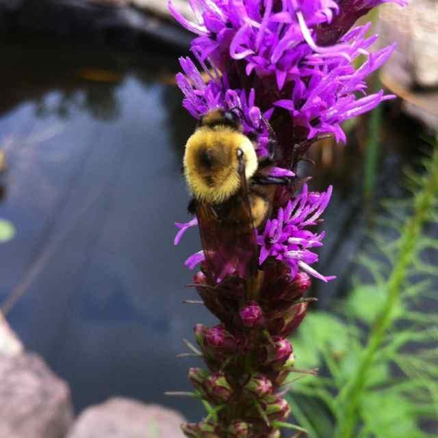 http://zhurnaly.com/images/Bee_flower_2.jpg