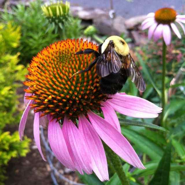 http://zhurnaly.com/images/Bee_flower_3.jpg