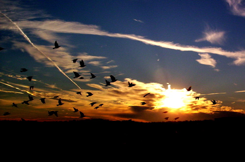 Birdy Sunset