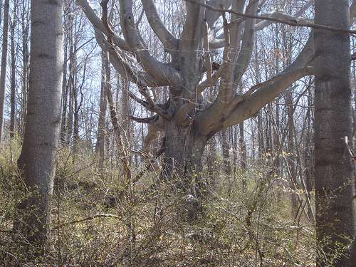 Gnarly Tree - photo courtesy Caren Jew