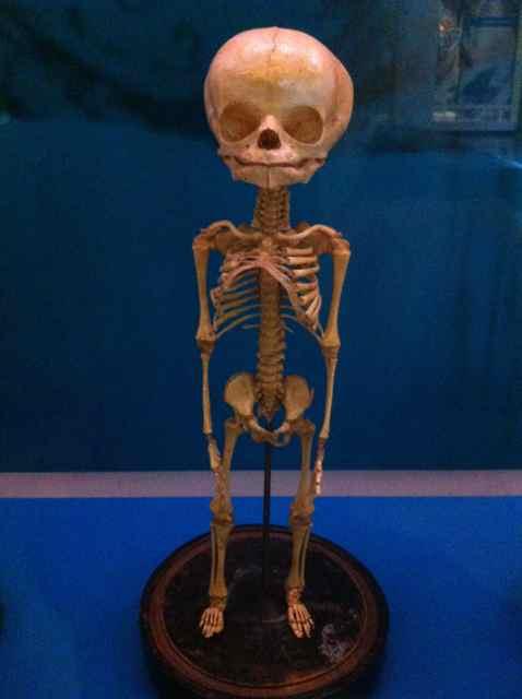 http://zhurnaly.com/images/NMHM_skeleton_2.jpg