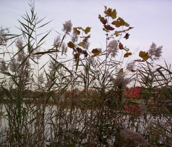 Plants along the verge of Lake Artemesia