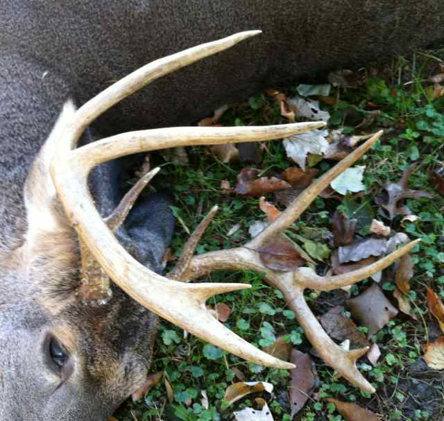 http://zhurnaly.com/images/Sligo_Creek_Trail_roadkill_buck.jpg