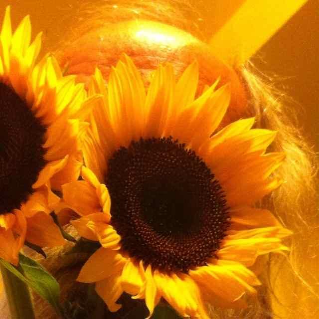 http://zhurnaly.com/images/Sunflower_selfie.jpg