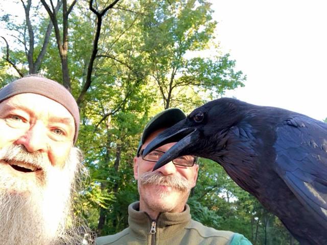Baltimore Zoo raven at mile 4