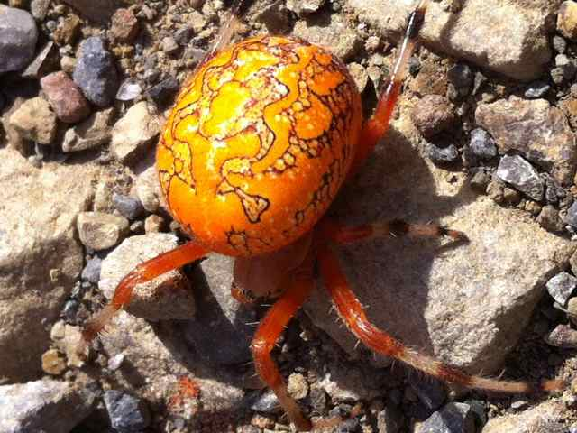 Marbled Balloons Fluorescent Orange Spider Zhurnalywiki: 2013-10-27 - fire on the ...