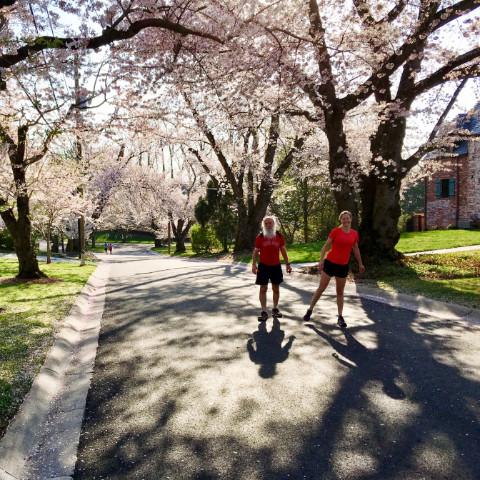 http://zhurnaly.com/images/running/Kenwood_cherry_blossoms_k2_z_2018-04-14_t.jpg
