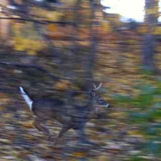 http://zhurnaly.com/images/running/Sligo_Creek_Deer_2013-11-24.jpg