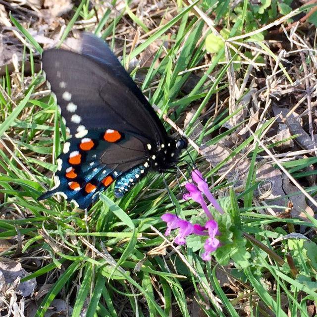 Crazy Desert Trail Race desert butterfly