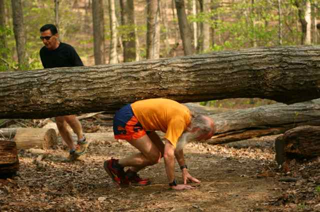 http://zhurnaly.com/images/running/Tree_Scrape_Spin_in_the_Woods_2012_z_Dan_Reichmann.jpg