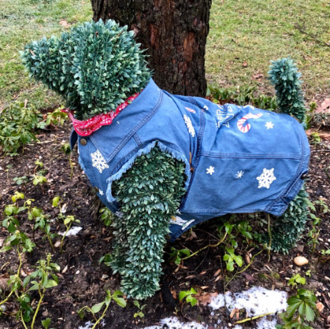 http://zhurnaly.com/images/running/kensington_green_lawn_dog_2019-03-02a_t.jpg